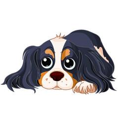 Spaniel dog vector