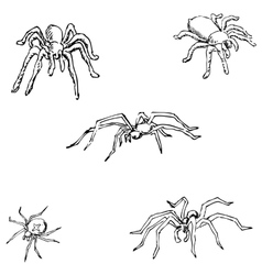 Spiders a sketch by hand pencil drawing vector