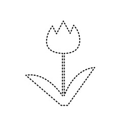 tulip sign  black dashed icon on white vector image