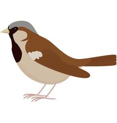 cartoon brown bird sparrow vector image