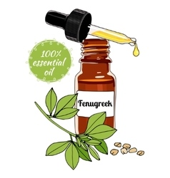 Bottle of fenugreek essential oil with dropper vector