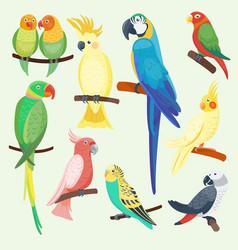 Cartoon exotic parrots set vector