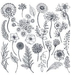 Collection of hand drawn flowers and plants vector
