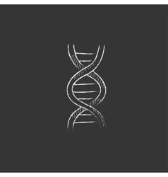 Dna drawn in chalk icon vector