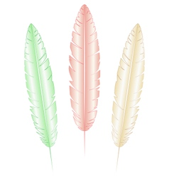 Light feathers on white vector