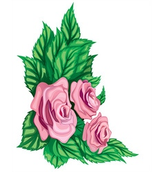 Pink rose design vector