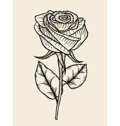 Rose  hand drawn artwork vector