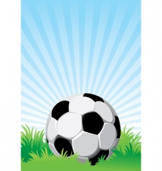 soccer on the field vector image