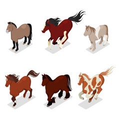Different breeds horses set with pony vector