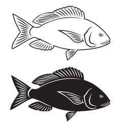 fish dentex vector image