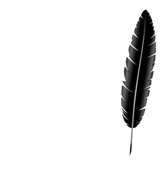 Feather isolated on white vector