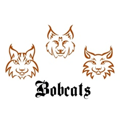 Bobcats and lynxs vector image