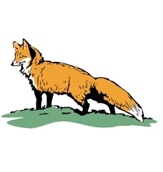 Fox sketch color hand drawn vector