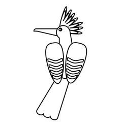 hoopoe bird exotic thin line vector image