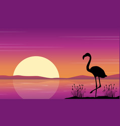 At lake scene with flamingo silhouettes vector