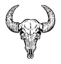 Buffalo skull isolated on white background vector