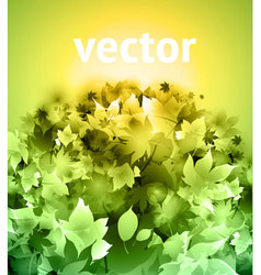 evergreen tree vector image vector image