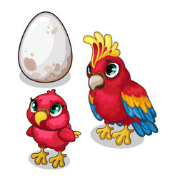Family of parrots parent baby and egg vector