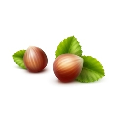 Full Unpeeled Hazelnuts with Leaves vector image vector image