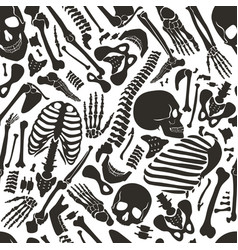 human skeleton seamless pattern with skulls vector image