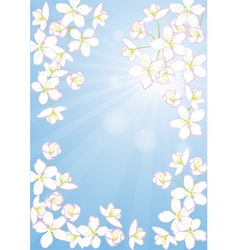 Cherry blossoms and sky vector