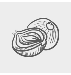 Onion sketch icon vector
