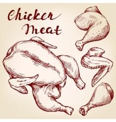 Chicken meat set hand drawn llustration vector image