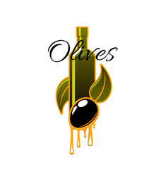 Olive oil bottle drips and black olives vector