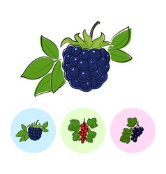 Fruit icons blackberry redcurrant  blackcurrant vector