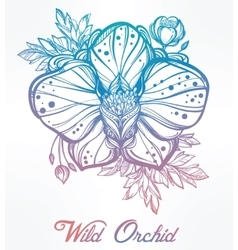 Hand drawn orchid flower vector