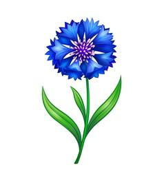 blue cornflower eps10 vector image