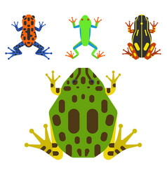 Frog cartoon tropical animal cartoon amphibian vector