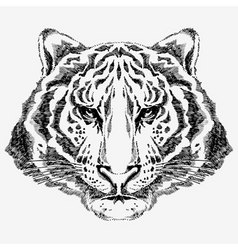 Tiger drawn vector