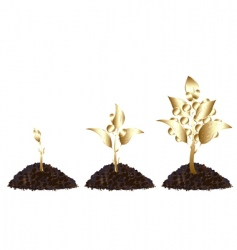 life process of golden tree vector image