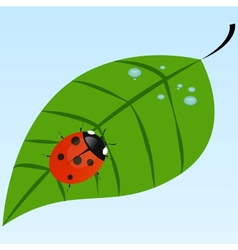 Ladybug on a leaf vector