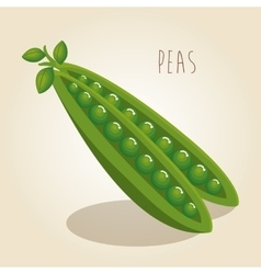 Peas fresh vegetable icon vector