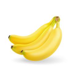 Banana fruit realistic bunch of bananas isolated vector