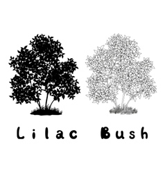 Lilac bush contours silhouette and inscriptions vector