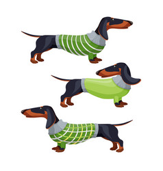 Dachshund dogs in green sweater side view vector