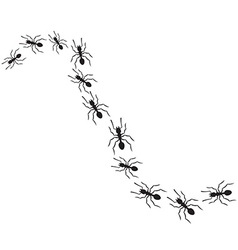 Pack of Ants vector image vector image