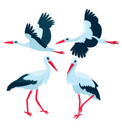 Stork standing and flying on white background vector image vector image