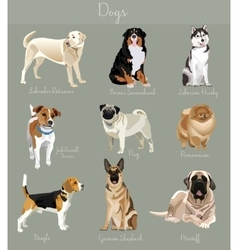 Different type of dogs set isolated big and small vector