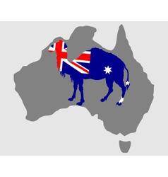 Australian camel vector image vector image