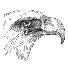 Bald eagle head vintage vector