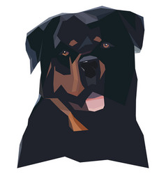 rottweilers portrait in a geometric style vector image