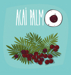 Set of isolated plant acai palm fruits herb vector