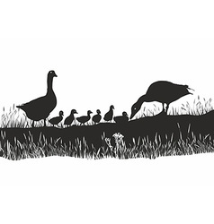Geese family on spring meadow vector image