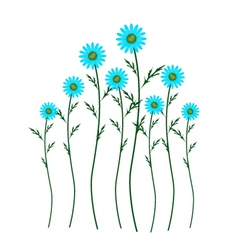 Light Blue Daisy Blossoms on White Background vector image vector image