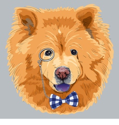 hipster dog chow-chow vector image