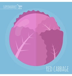 Flat design red cabbage vector image vector image